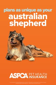 Every breed has different health needs. ASPCA Pet Health Insurance plans were designed with the needs of Australian Shepherds in mind. Return to your quote today to view customized plan options for your pet. Health Insurance Plans, Pet Insurance, Health Care Coverage, Australian Shepherds, Be Yourself Quotes, Dog Cat, Pets, Fun, Aussie Shepherd