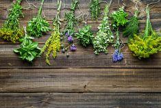 """Gegen jedes """"Wehwehchen"""" ist ein Kraut gewachsen!  #leadingsparesorts #leadingspa #wellness #wellnesshotel #wellnessurlaub #kräuter #auszeit #gesundheit #gesundheitsblog #kraut #hausmittel #stayathome #bleibzuhause #bleibgesund Resort Spa, Plants, Blog, Stay At Home, Time Out, Remedies, Health, Garten, Flora"""