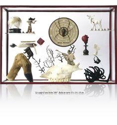 Maissa Toulet's Curiosity Cabinets