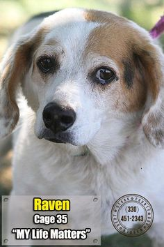 CODE RED URGENT!!! RESCUES/FOSTERS/ADOPTECODE RED URGENT!!! RESCUES/FOSTERS/ADOPTERS NEEDED ASAP!!! STARK CO. DOG WARDEN DEPT Canton, OHIO https://www.petfinder.com//pet-search?shelter_id=OH175