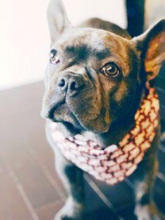 I Love Dick Heart Dog Pet Bandana