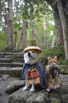 Funny pictures about Shiba Inu and cat. Oh, and cool pics about Shiba Inu and cat. Also, Shiba Inu and cat. Animals And Pets, Baby Animals, Funny Animals, Cute Animals, Shiba Inu, Japanese Dogs, Japanese Nature, Gatos Cats, Dog Pictures