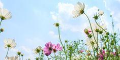 5 CONSELHOS PARA UMA PRIMAVERA MAIS FLORIDA | A primavera chegou e, com ela, uma explosão de cor. Depois de um período marcado pelo frio, pela chuva e até pela geada, o jardim entra numa fase de transformação que obriga a intervenções cuidadas e planeadas. Veja as cinco tarefas a empreender na fase que antecede a chegada do verão, uma altura marcada pelo odor aromático e pela cor das flores. #oleomac #oleomacportugal #primavera #florido #jardim #dicas #cuidados #aromas #flores #cores