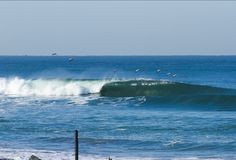 (See Next Pin) CAs Surf | Gulls lead the way at Los Frailes on the Sea of Cortez, Baja California Sur