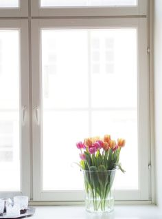 Pink and orange tulips by my window   Pupulandia