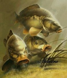 Fish Artwork, Fish Paintings, Dmc Floss, Carp Fishing, Counted Cross Stitch Patterns, First Photo, Super Cute, Black And White, Artist