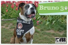 Bruno 3, I got to go to my forever home today it is so much fun!