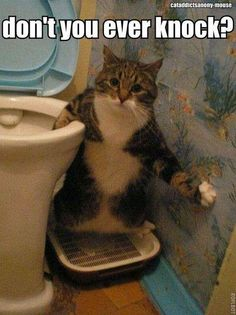 Don't walk in on #kitty, it's not nice!