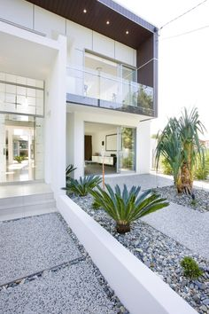 Contemporary Brisbane Banya House by TONIC Minimalist Modern Gardening with Green Palms Tree