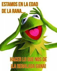 Rana Rene