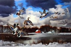 Artist David Maass Unframed Duck Art Print Season's End-Mallards | WildlifePrints.com