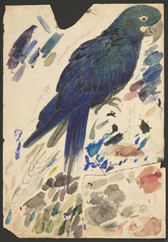 Watercolor study of a Lear's Macaw (Anodorhynchus leari), Houghton Library, Harvard University