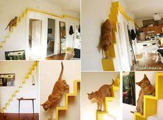 #Arquitetura para gatinhos ! ownt