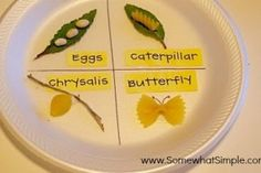butterfly life cycle- use real leaves and sticks to have an excuse to go on a nature hunt