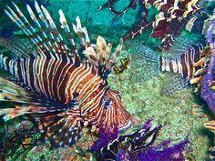 The Perks of Diving in Musandam, Oman - Like us on.fb.me/1tbQUk2
