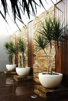 Small Backyard Landscaping Ideas backyard ideas, awesome ideas to create your unique backyard landscaping diy inexpensive on a budget patio – Small backyard ideas for small yards Container Plants, Container Gardening, Best Indoor Plants, Walled Garden, Garden Landscape Design, Tropical Garden Design, Desert Landscape, Small Garden Design, Landscape Designs