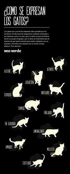 Así es como se pone tu gato cuando se siente curioso: | 12 Infográficos prácticos que todo amante de los gatos necesita