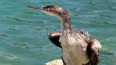 cormorant resting near blue sea