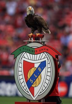The Eagle of Lisbon at Estadio da Luz - Benfica in Benfica Wallpaper, Portugal Soccer, My Dream Team, St Etienne, Soccer Poster, We Are The Champions, Image Fun, Sports Clubs, Sports Logo