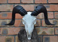 Купить Череп барана - череп барана, череп, бараний рог, овен, шаман, готика, Алтарь