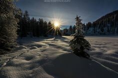 My Christmas Tree by Michele Rossetti on 500px