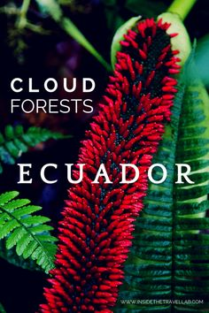 The stunning cloud forests of Ecuador from @insidetravellab