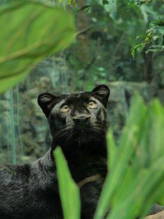 Funny Wildlife, funnywildlife: prince of darkness!!
