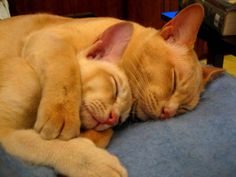 Spooning is sexy. Cats spooning is cute. Cute is sexy. Cats aren't sexy. I've dug a whole haven't I?