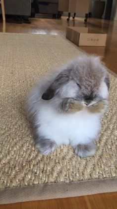 Cute Animal Videos, Cute Animal Pictures, Cute Little Animals, Cute Funny Animals, Funny Cats, Cute Baby Bunnies, Cute Cows, Cute Creatures, Animals Beautiful
