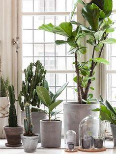 Modern Style Home Interior Design #home #interior #succulents #plants #pots #homedesign