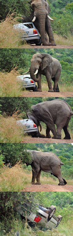 safari park near Johannesburg, South Africa..(my title: I hate cars). By Ryan Van Wyk - Pixdaus