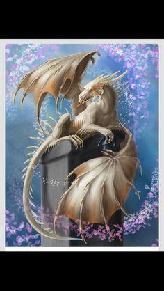 Dragon blanco Photo Dragon, Dragon Medieval, Fantasy Kunst, Cool Dragons, Dragons Den, Dragon's Lair, Dragon Artwork, Dragon Pictures, Dragon Pics
