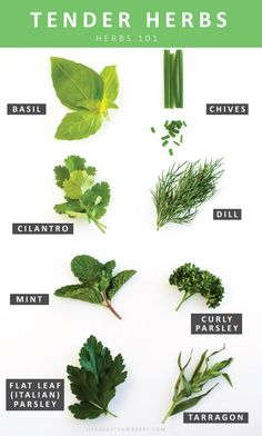 This informative, easy-to-read post has everything you've ever wanted to know about choosing, storing, and using fresh herbs! Calories In Vegetables, Fruits And Vegetables, Cooking With Fresh Herbs, Cooking Herbs, Asian Vegetables, Types Of Herbs, Spices And Herbs, Herb Garden, Garden Pests