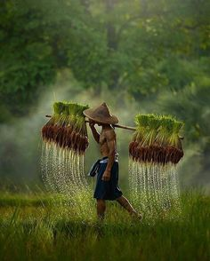 Rice field's farmer in by . Rice field's farmer 🌾 in by . ========================= Join us ⭐️⭐️⭐️⭐️⭐️ Amazing pictures from around the 🌏 in our gallery. Village Photography, Nature Photography, Travel Photography, Funny Photography, People Around The World, Around The Worlds, Cool Photos, Beautiful Pictures, Nature Pictures