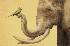 A New Friend - Canvas Print by Terry Fan