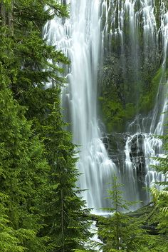 The vast Willamette National Forest is located along the western slopes of the Cascade Mountains and covers nearly million acres. The forest contains spectacular scenery including a number of volcanoes, mountains, and rivers. Oregon Travel, Travel Usa, Oregon Hiking, Travel Tourism, Beautiful Waterfalls, Beautiful Landscapes, Cool Places To Visit, Places To Travel, Oregon Waterfalls