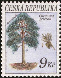 Stamp: Trees: Pine tree (Pinus silvestris) (Czech Republic) (Protection of Nature) Mi:CZ 25,Yt:CZ 24,POF:CZ 25