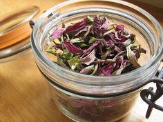 dried echinacea by peacefulbean ( goodkarma ), via Flickr