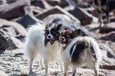 How To Help Your Dog Behave Better Fast >>> More info could be found at the image url.