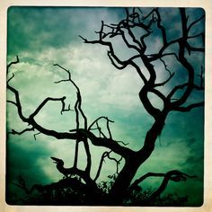 ... Dead Tree Art on Pinterest | Trees Dead tree tattoo and The dead