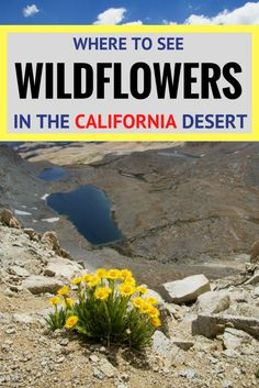 Are you planning a vacation to California to see the wildflowers? Check out this list of The Best Places To See Wildflowers in the California Desert before you visit.