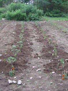 Garden leave massachusetts