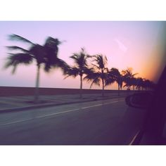 amazing #palms and #sunset - on the road to #burjkalifah - #dubai #palmtrees