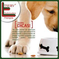 BLOG DOS INSETOS - ASSOCIAÇÃO BRASILEIRA DE FRANCHISING: DICAS TSERV