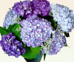 Keep your cut hydrangea blooms from wilting in the vase. Simple!  I've used this method and it works perfect.