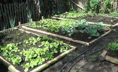 Como Hacer Un Huerto En Casa. Un huerto en casa, una idea devida saludable    Verduras sanashechas en casa   Los vegetales son los alimentos más saludables que puedes consumir, y ¿de qué forma lo puedes hacer? Es muy sencillo lo puedes hacer estando en tu casa, cultivando semillas en tu propio huerto. Si tú misma realizar el huerto, te saldrá más económico y así aprenderás lo valioso que es consumir los vegetales. Observa....  Como Hacer Un Huerto En Casa. Para ver el artículo completo…
