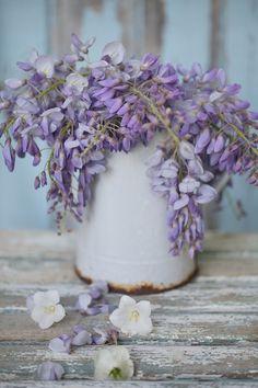 Flowering wisteria in an enamel jug
