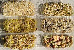 Saját termés reggelire: Csíráztatás otthon Sprouts, Chicken, Vegetables, Ethnic Recipes, Food, Vegetarian Cooking, Vegan Food, Cooking Recipes, Plate