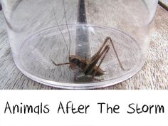 Animals after the Storm - bug hunting after a summer storm   # Pin++ for Pinterest #