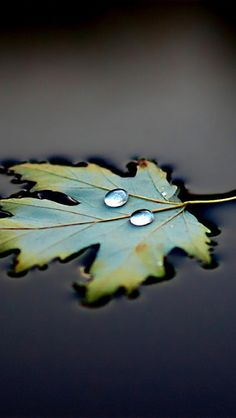 Water Leaf Drops #iPhone 5s Wallpaper Download | iPhone #Wallpapers One-stop Download